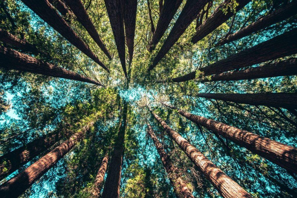preserving the wilderness in the OpenSource Communities, Il ruolo delle comunità Open Source nell'ecosistema Internet